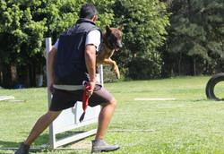 Canil Guarda e Proteção