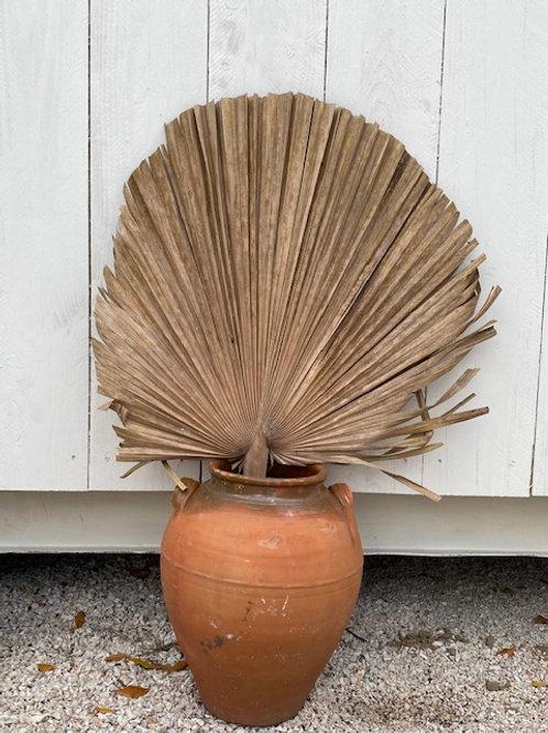 Feuilles de Palmiers