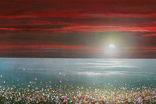 Cornish Sunset & Wild Flowers