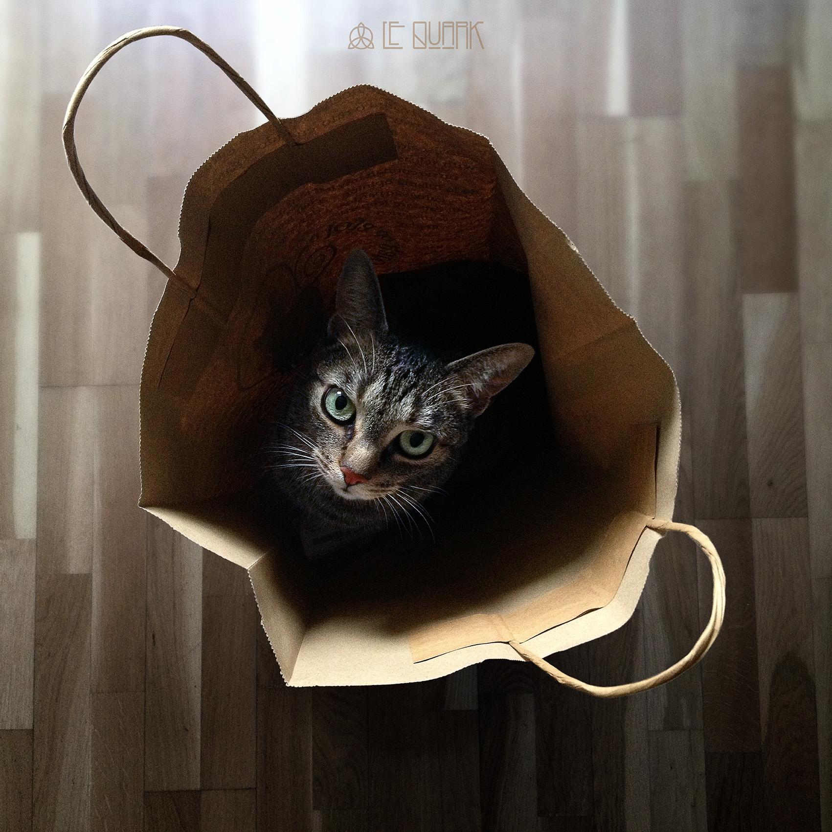 CATCH THE  CAT BAG!.jpg