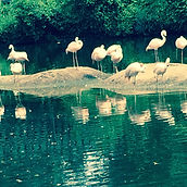 birds gather and reflect 1.jpg