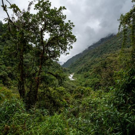 Abenteuer Dschungel