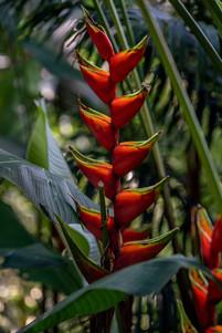 Botanischer-Garten-Santa-Cruz-2.jpg