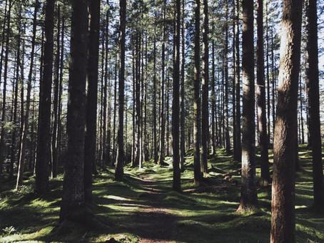 Ta skogen tilbake