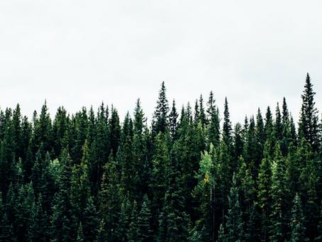 Forby skoghogst i Hekkesesongen