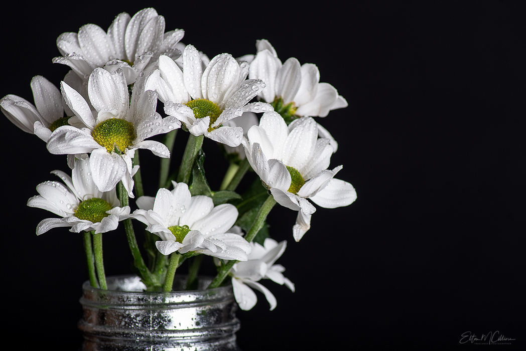 White Daisies. Ecommerce Photography. Commercial Photography. Commercial Photographer. Product Photography. Product Photographer. Food Photography. Food Photographer. E-commerce. Cambridge. London. United Kingdom. UK East Anglia. Business Photographer. Business Photography. Creative Product Photography