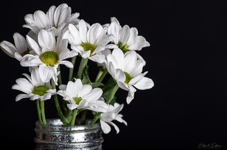 Bunch of white flowers