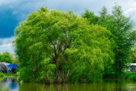 Willow Tree. Travel. Travel blog. Road Trip. Travel tips. Travel Photography. Photography. Commercial. United Kingdom. Europe. Gap year. Wanderlust. camper van. Camping.