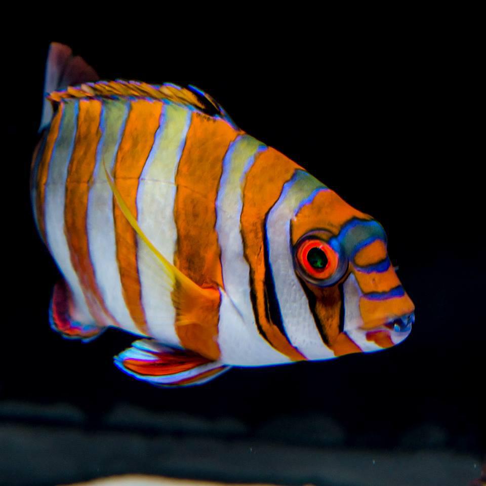 FishTeeth2