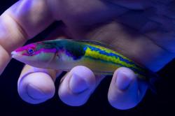 FishInHandFlip