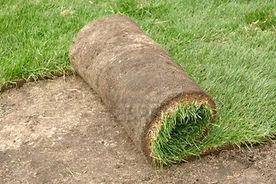 sod-lawn.jpg