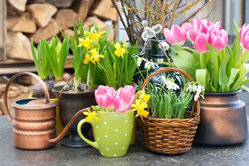Fellner Blumen Frühlingsblumenhintergrund