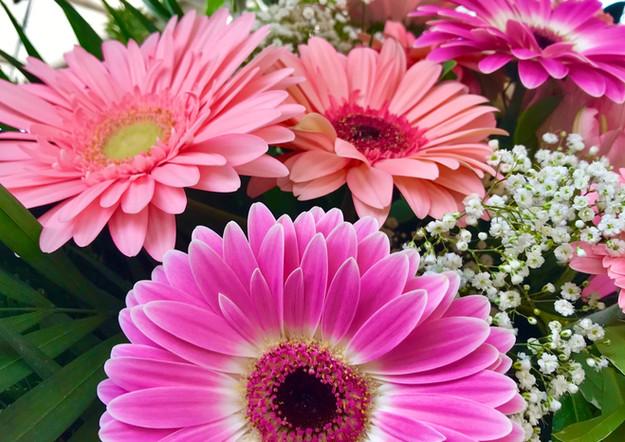 Fellner Blumen Trauerfloristik Gerbera rosa pink
