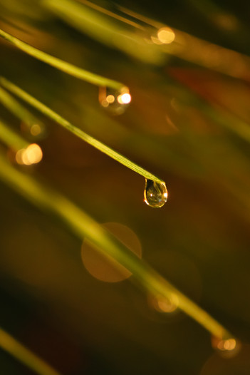 ealry morning dew