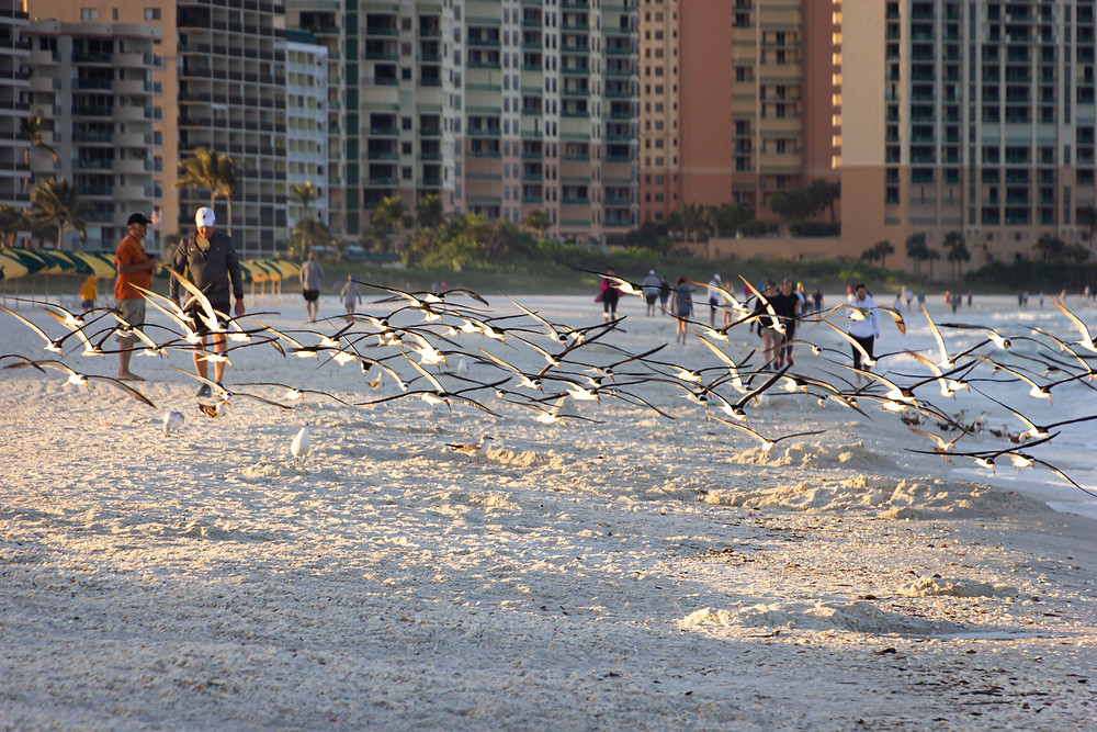 There were a ton of birds along the beach just after sunrise