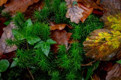 Glengarriff Woods Nature Reserve Waterfa