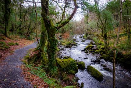 Glengarriff Woods Nature Reserve (6 of 1