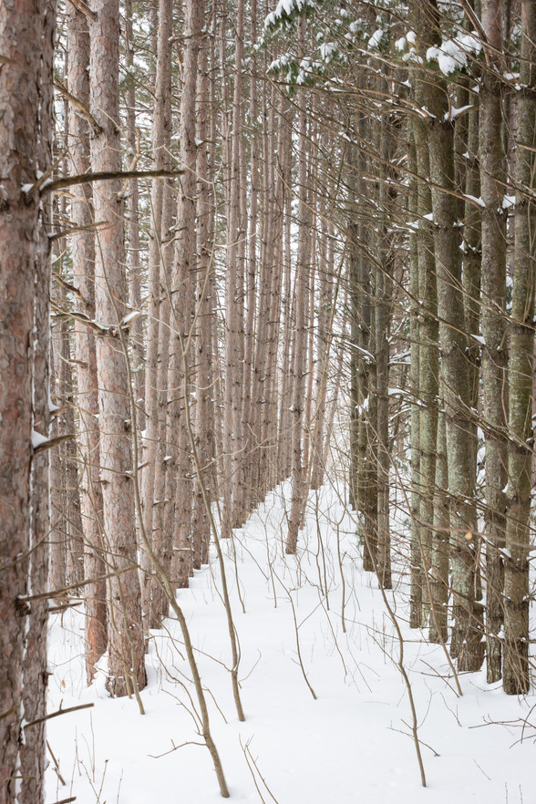 mn winter woods