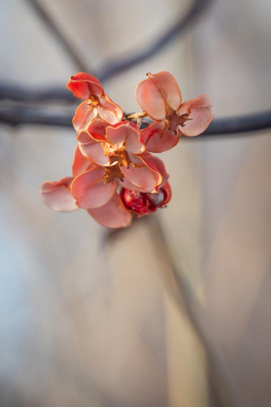 MN winter flower