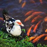Wildlife in Hawaiian Botanical Garden