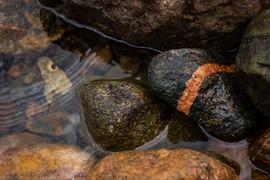 BWCA Rocks