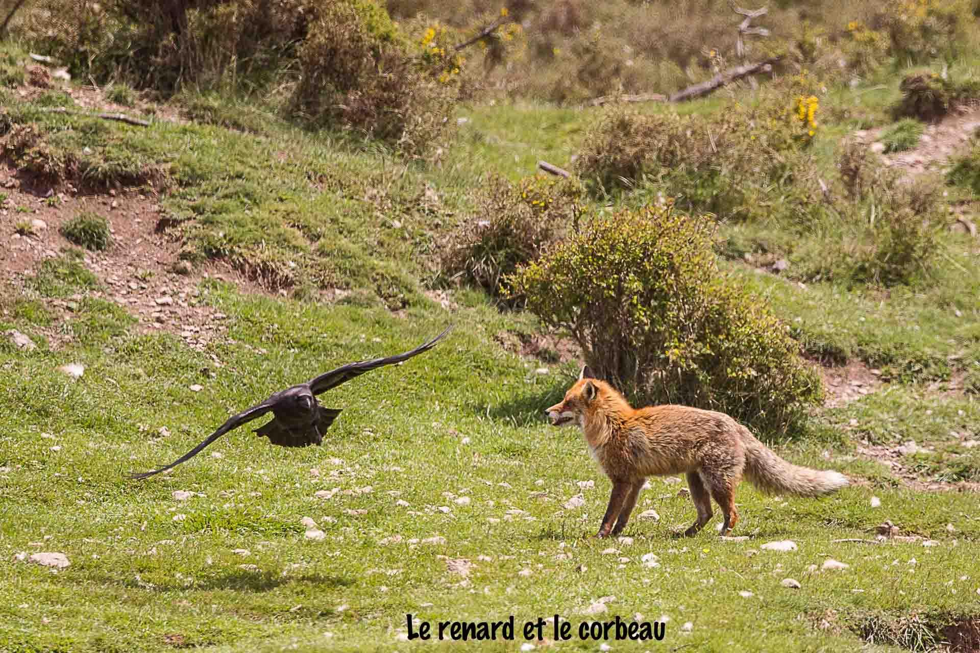 corbeau renard copie