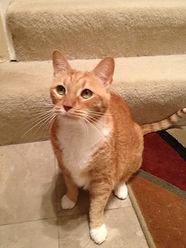 North Tampa Cat Sitter