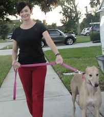 Carrollwood Pet Sitter with May, the greyhound.