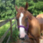North Tampa pet sitter: horse friend.