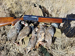 guns and birds.jpg