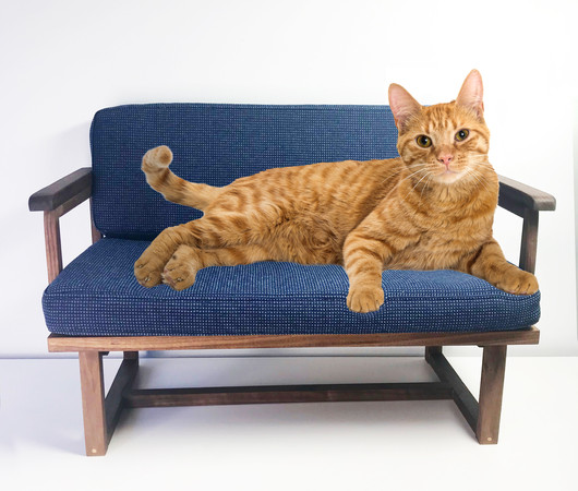 Pet Couch for your cat