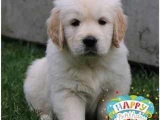 Happy Birthday D-Wurf!