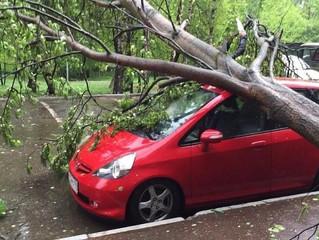 Кто должен отвечать, если на машину во дворе упало дерево