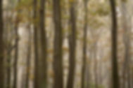 Fotoobraz - Stromy v mlze-09158.jpg