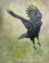 ravenhop.jpg