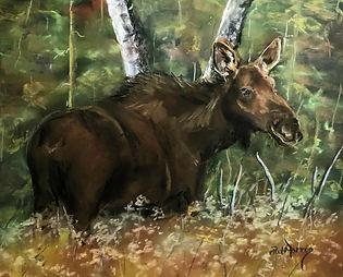 moose cbi.jpg