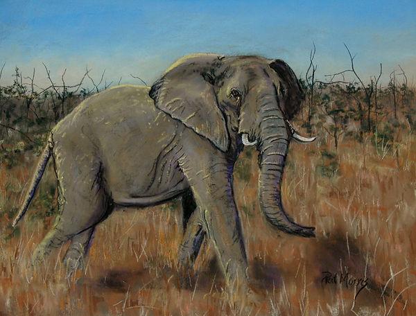 elephantfinal.jpg