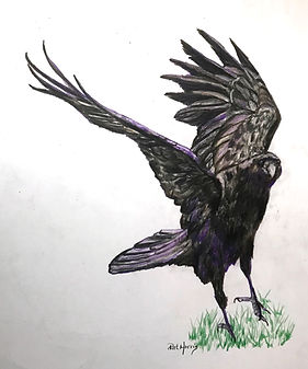 ravenhop.pencil.jpg