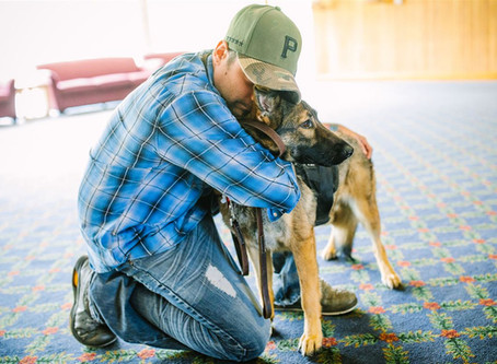 Pet Tales: Emotional support animals cause problems for service dogs