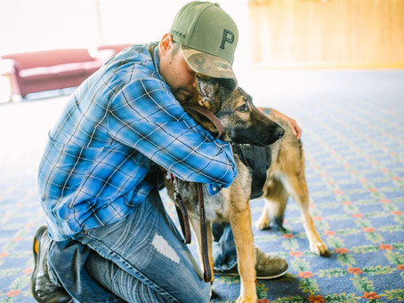 A friend's paw: Veterans celebrate with their service dogs