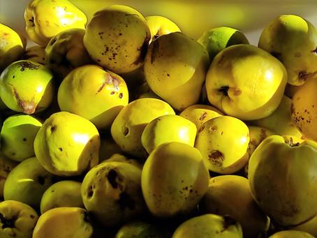 Die Quitte - goldener Apfel - ein Symbol für Glück, Freude und Sinnlichkeit