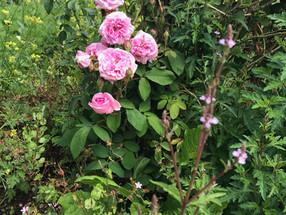 Sommer-Garten-Rundgang