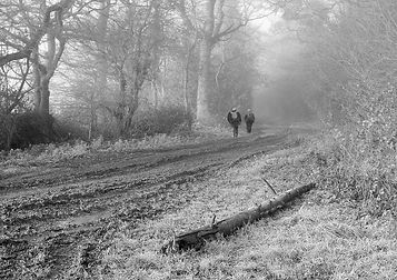 A walk in the mud mist and frost.jpg