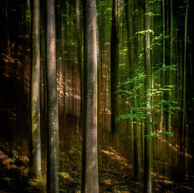 In The Forest Deep