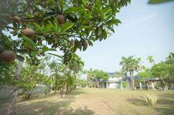 FCC_FCC Building - Ciku Tree Perspectiv