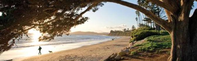 lo_butterfly_beach-tree.jpg