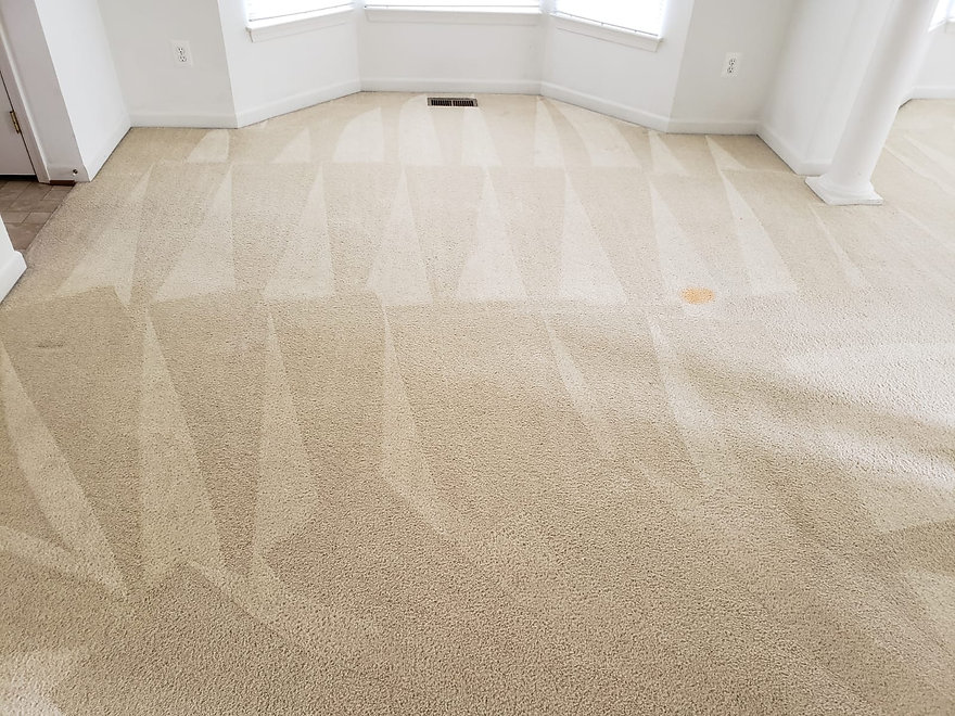 Edibill Carpet Cleaning (12).jpg