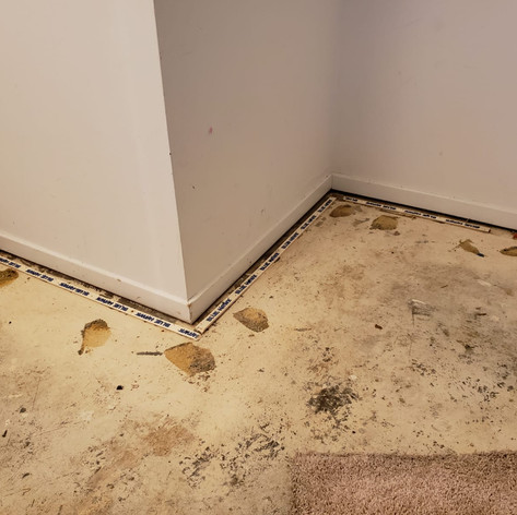 Edibill carpet replacement (1).jpg