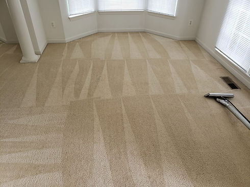 Edibill Carpet Cleaning (11).jpg