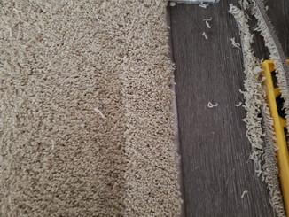 Edibill Carpet repairs (6).jpg